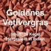 Goldenes Vetivergras